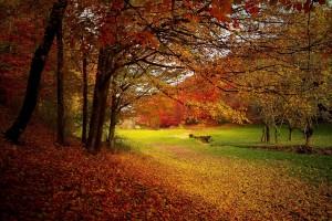 autumn-1072827_1920