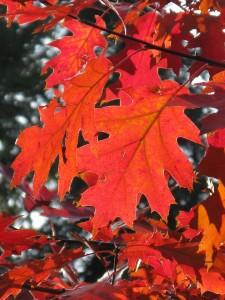 leaf-8287_1920