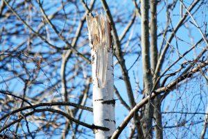 tree-671999_1920