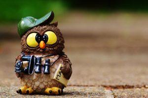 owl-964011_1920